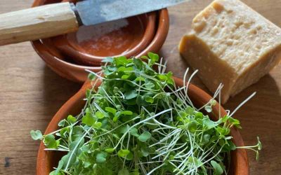 Lækker mad med mikrogrøntsager
