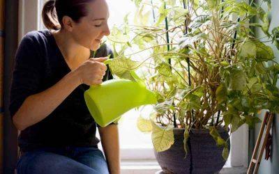 Lav dit eget økologiske flydende gødning med bokashi