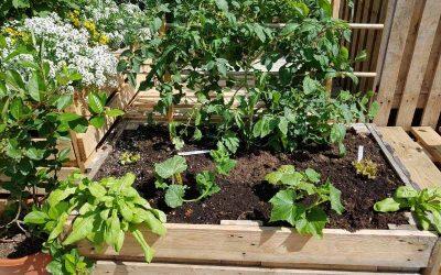Jord til højbede – Sådan genopfrisker du jorden med bokashi