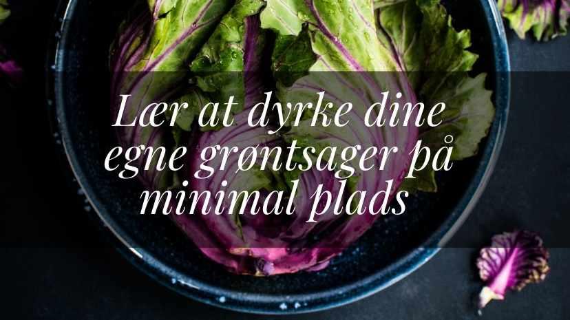 lær at dyrke dine egne grøntsager