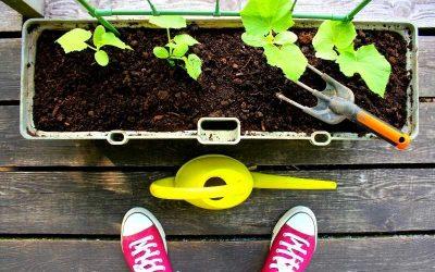 Hvor meget skal du vande dine planter?