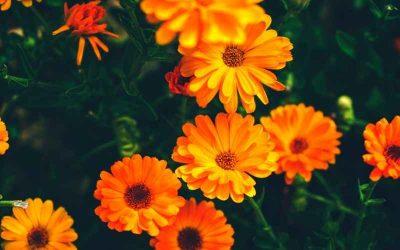 5 fantastiske selskabsplanter i krukke haven