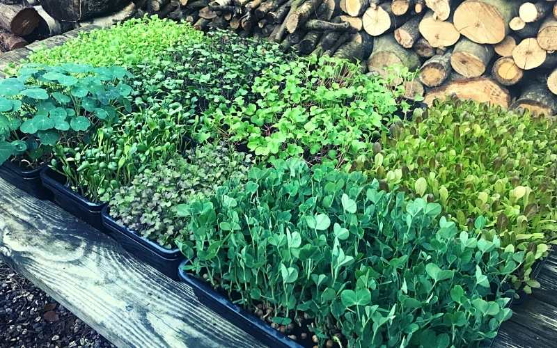 Mere grønt fra salatbaren