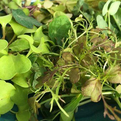 Nyhøstet salat